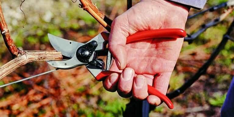 داشتن قیچی مناسب - چیکاو